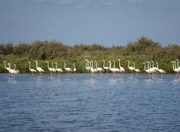 Tagus Estuary Natural Reserve